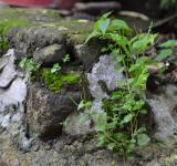 Free Photo - Rock and Vegetation
