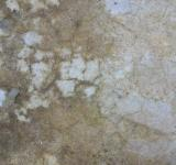 Free Photo - Rough and Grunge Wall Texture