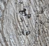 Free Photo - Rough Wall Concrete
