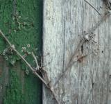 Free Photo - Wood wall texture
