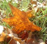 Free Photo - Autumn leafs