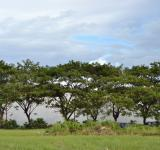 Free Photo - The tree line