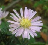 Free Photo - Little purple flower