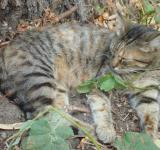 Free Photo - Sleeping street cat