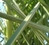 Free Photo - Palm leafs