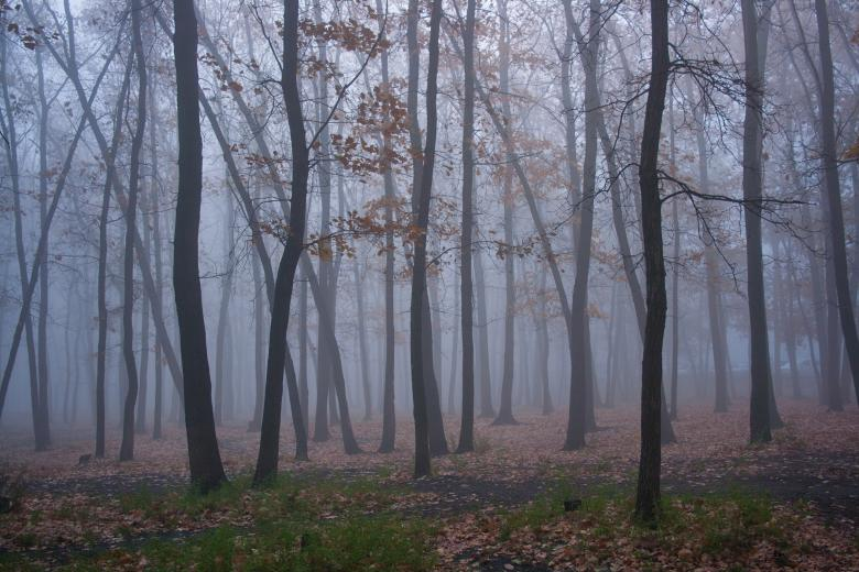 Free Stock Photo of trees and fog Created by 2happy