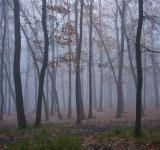 Free Photo - trees and fog