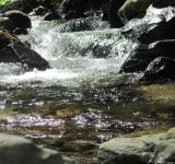 Free Photo - Mountain river