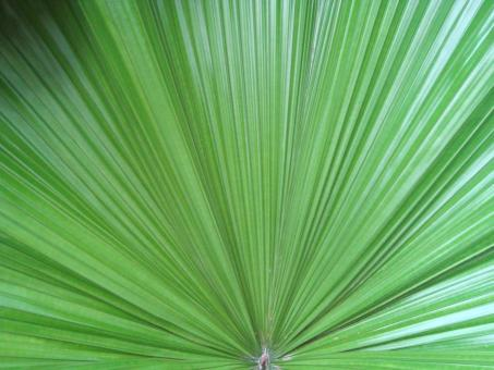 Palm Leaf Background - Free Stock Photo