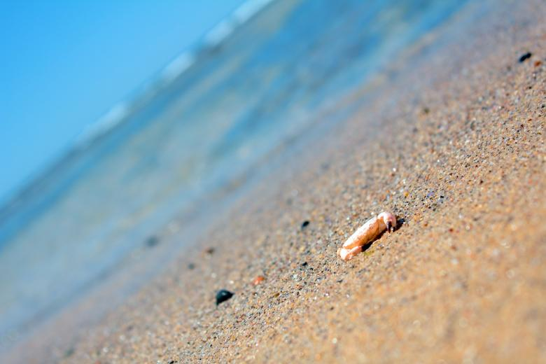 Free Stock Photo of Crab on beach Created by Joses Tirtabudi