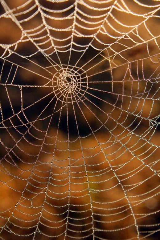 Открытка паутина, декабря картинки красивые