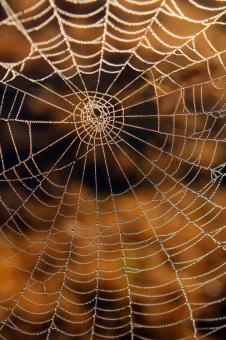 Spider Web - Free Stock Photo