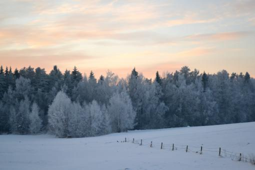 Winter evening in countryside - Free Stock Photo