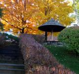 Free Photo - Autumn Asian Garden