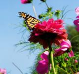 Free Photo - Butterfly Perched