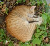 Free Photo - Sleeping cat