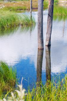 tree reflected in water - Free Stock Photo