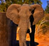Free Photo - Safari Elephant Abstract