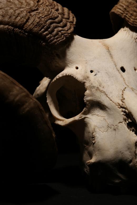 Animal Skull - Free Spooky Stock Photos