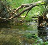 Free Photo - Forest river