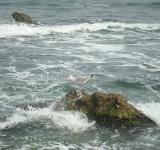 Free Photo - Seagull on a rock