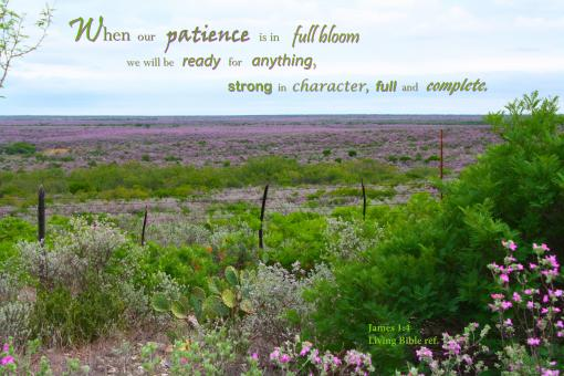 Patience in Full Bloom - Free Stock Photo