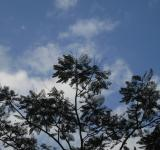 Free Photo - Blue Sky & Tree