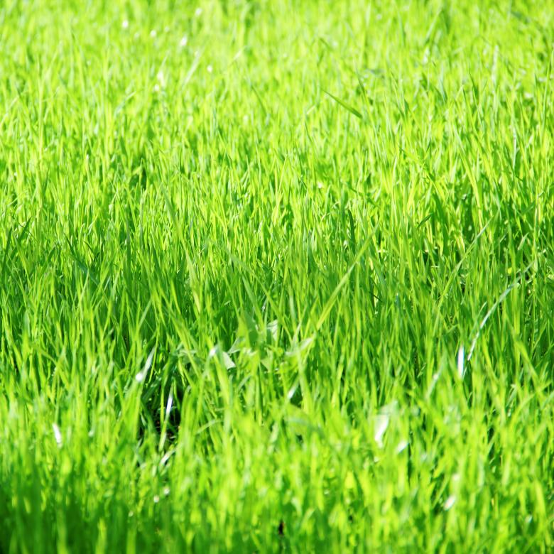Free Stock Photo of Grass Created by Alsusha