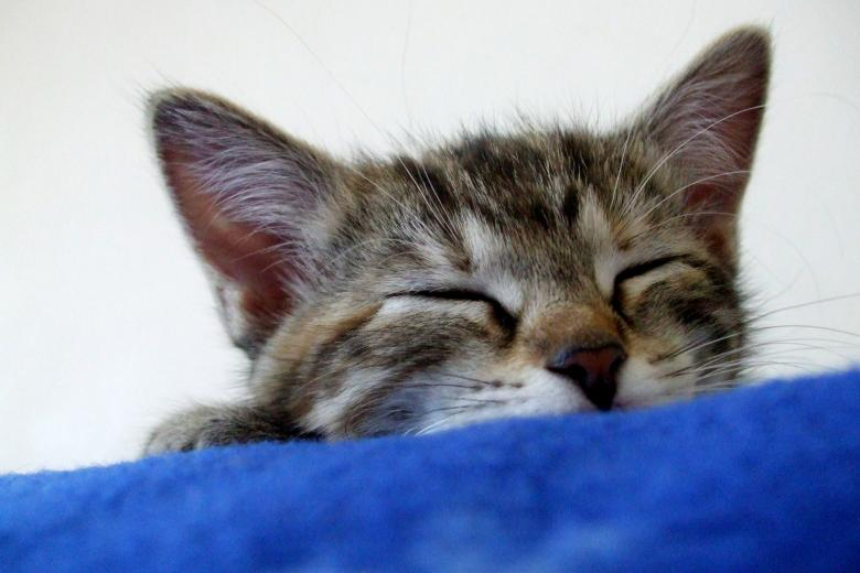 Free Stock Photo of Kitty Slumber Created by Crystal Kordalchuk