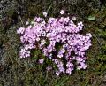 Free Photo - Small purple flowers
