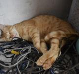 Free Photo - Cat on a cable