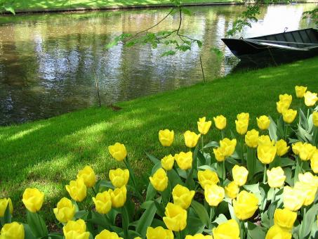 Yellow tulips and a boat - Free Stock Photo