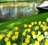 Free Photo - Yellow tulips and a boat