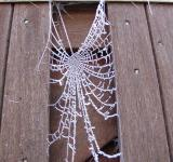 Free Photo - Frozen web