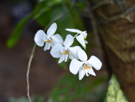 White orchid flowers - Free Stock Photo