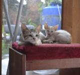 Free Photo - Relaxing Kitties