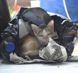 Free Photo - Kitten in a plastic bag
