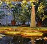 Free Photo - Victoria water-lilies
