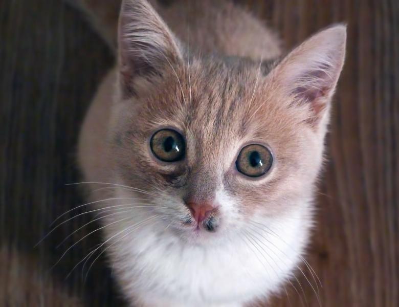 Free stock image of little kitten created by Vladimir Ovcharov