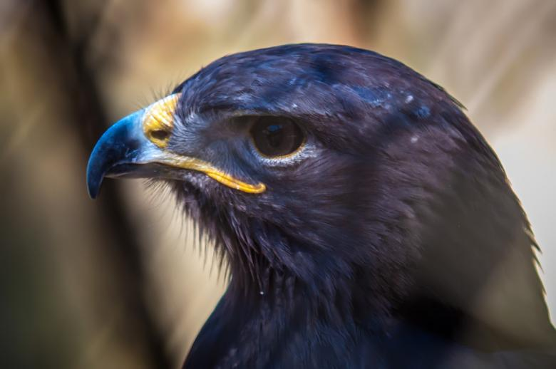Free Stock Photo of Hawk Created by agphotostock.com
