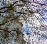 Free Photo - Cathedral and branches