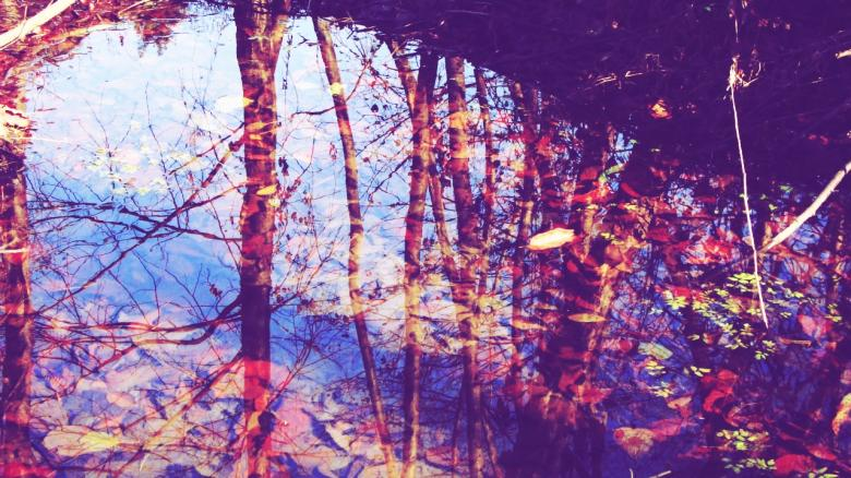 Reflection - Free Autumn Stock Photos