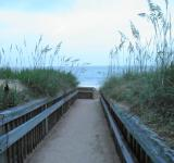 Free Photo - beach grass