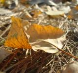 Free Photo - Dry autumn leaf