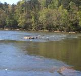 Free Photo - Fast-Flowing River