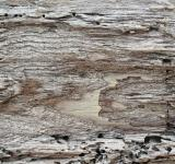 Free Photo - Driftwood Background