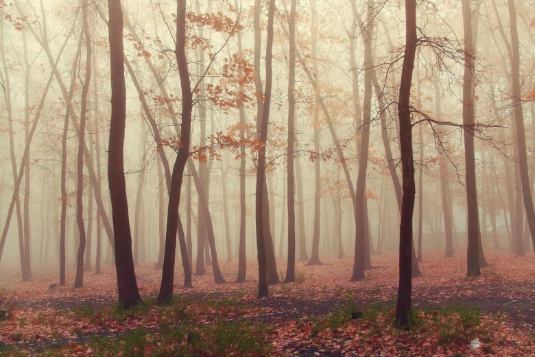 Forest with trees and fog - Free Stock Photo By  2happy