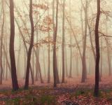 Free Photo - Forest fog