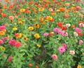Free Photo - Colorful flower garden
