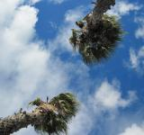 Free Photo - Palms and sky